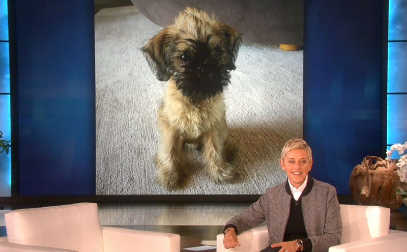 Ellen DeGeneres' family - dog with name Kid
