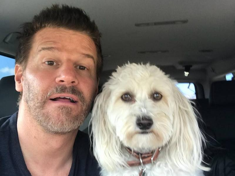 David Boreanaz's family: parents, siblings, wife and kids