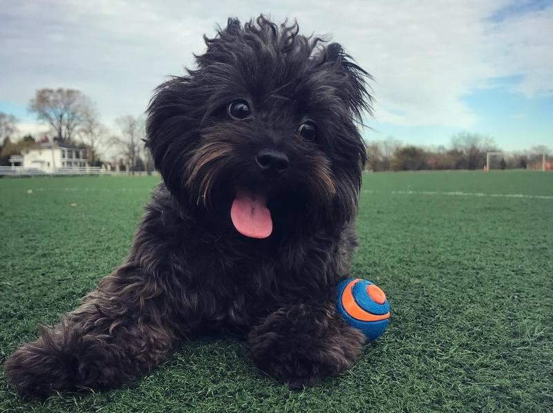 Bebe Rexha's family - dog Bear Rexha